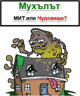 Информация за мухъла в дома Трейдплас Бургас